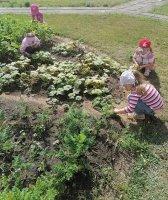 За здоровьем на огород